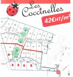 Plan coccinelles1